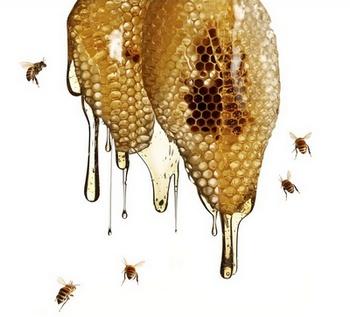 Cách Phân Biệt Mật Ong Nguyên Chất –  Mua Mật Ong Nguyên Chất Ở Đâu